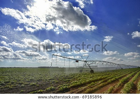 Large squash field and mechanical irrigation system - stock photo