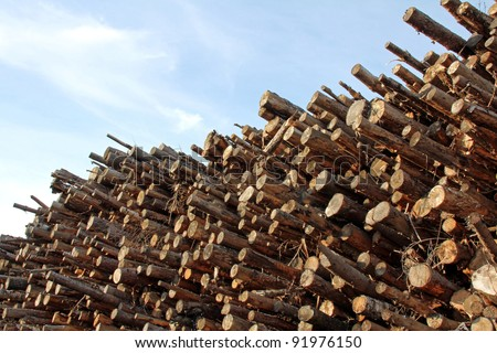 Large stack of wood for fuel and energy with blue sky and clouds on the background. - stock photo