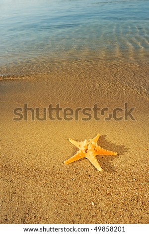Large starfish on golden sandy beach - stock photo