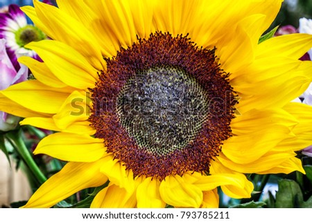 Sun… Sunflowers | Emerald Studio Photography