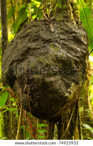 Large termitary in Amazonian rainforest soaked by daily abudant rains. - stock photo