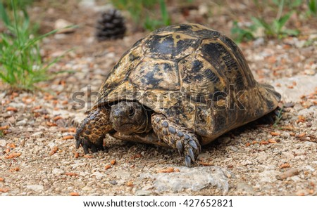 Large tortoise on the ground.
