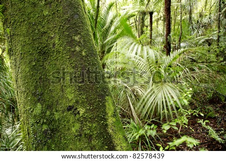 Large tree and ferns in tropical forest