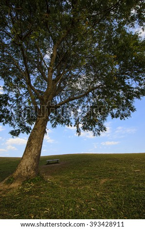 Large tree on a grassy hill with leaves and bench - stock photo