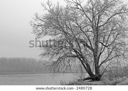 Large Tree on edge of Missouri River after Ice Storm - stock photo