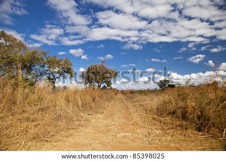 Large tree on the side of a dirt road in Zambia - stock photo