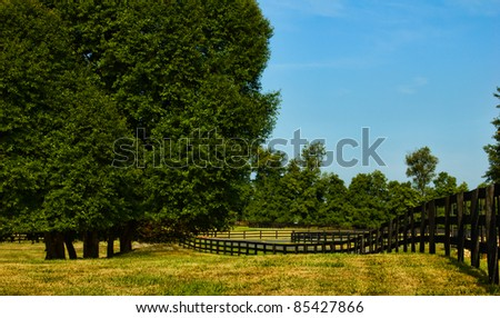 Large trees along a rural, country road with a wooden fence