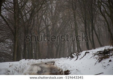 large trees in dark winter forest covered with snow