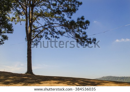 Large trees on the mountains on a beautiful blue. - stock photo