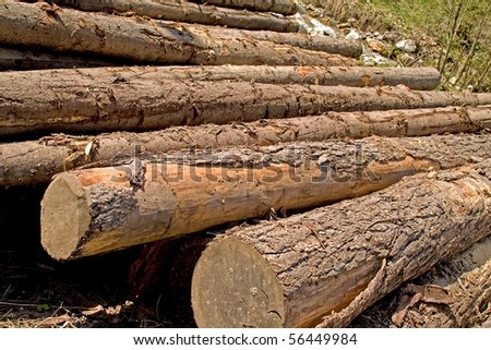 Large trees, ready for manufacturing. - stock photo