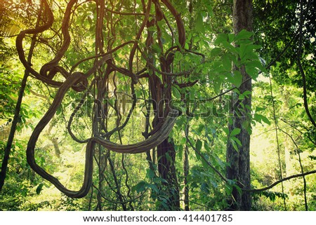 forests the gift of nature Free essays on trees the gift of nature get help with your writing 1 through 30.