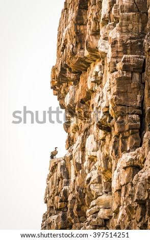 Large Vulture perched on a canyon wall in Botswana, Africa - stock photo