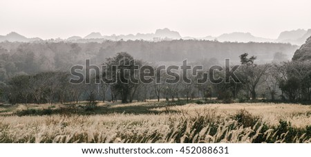 Large White Flower Grass Field in the Mist