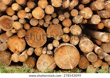 Large Woodpile From Big Pine Logs For Forestry Industry. Background And Texture With Space For Text Or Image - stock photo