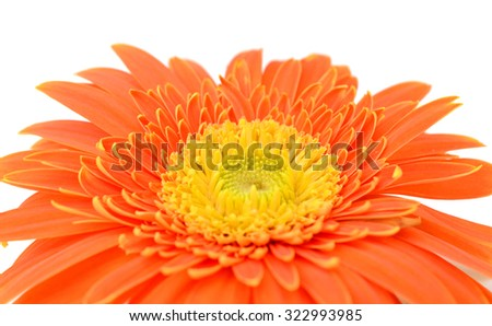 Large yellow-orange gerbera flower on white background