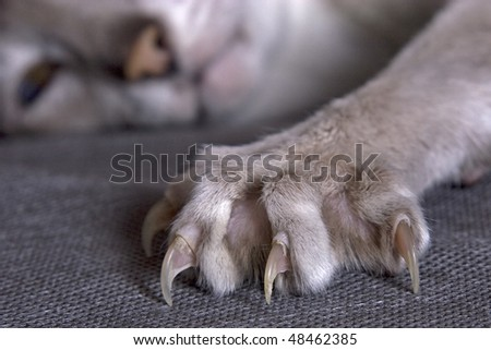 Largely cat's paw with the extended claws - stock photo