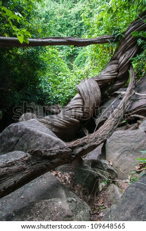 Largest creeping plant in Thailand - stock photo