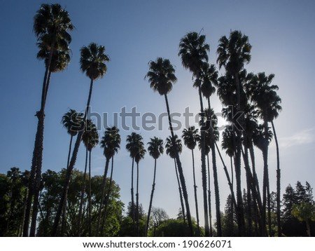 Las Palmas Park is a beautiful spot with lush palm trees surrounded by a picturesque pond. - stock photo
