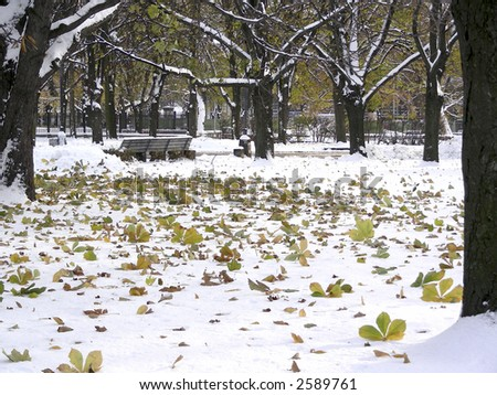last autumn leaves on first snow in park at Riga, Latvia - stock photo