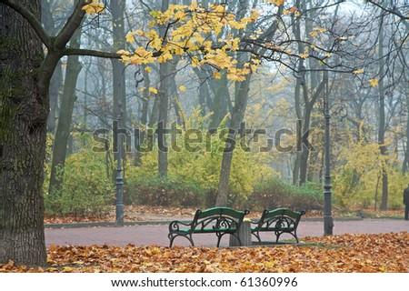 Last golden tree leafs and benchs in autumn city park (foggy November morning in Ivana-Franko park, Lviv, Ukraine) - stock photo