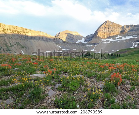 Last light with wildflowers in the Utah mountains, USA. - stock photo