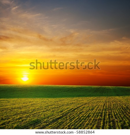 last sunrays over green field - stock photo
