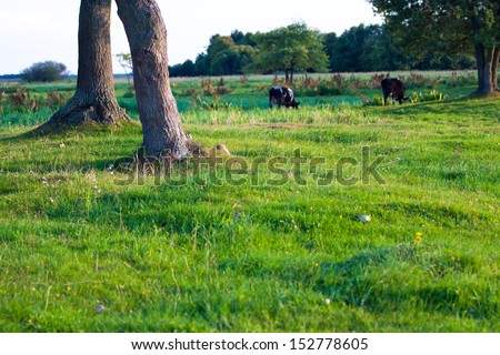 Late afternoon Biebrza swamps reserve view - stock photo