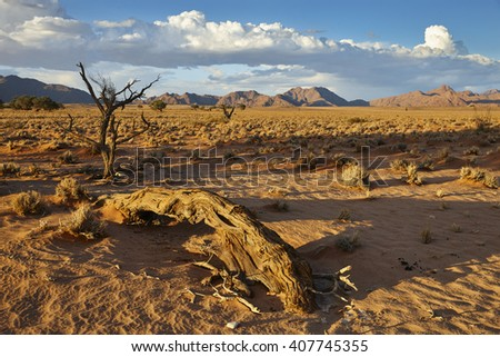 Late afternoon in Sossusvlei, Namibia, Africa - stock photo
