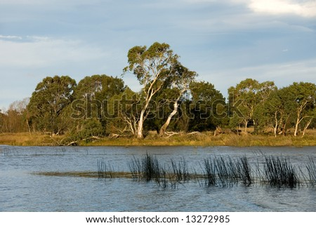 Late Afternoon on the Wingecarribee River