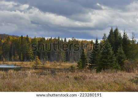 Late afternoon Pine trees, in an Autumn setting, with a small lake.  - stock photo