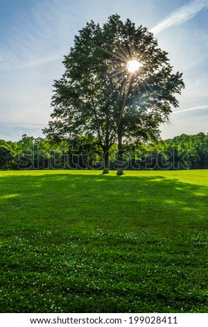 Late afternoon sunlight streams through the trees in Holmdel Park in New Jersey. - stock photo