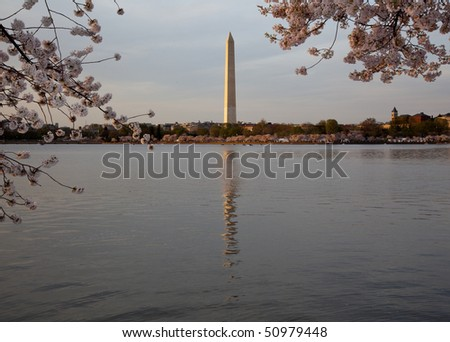 Late afternoon sunset shot of the Washington Monument reflected in water and surrounded by blossoms - stock photo