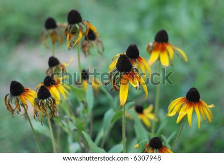 Late autumn flowers - stock photo