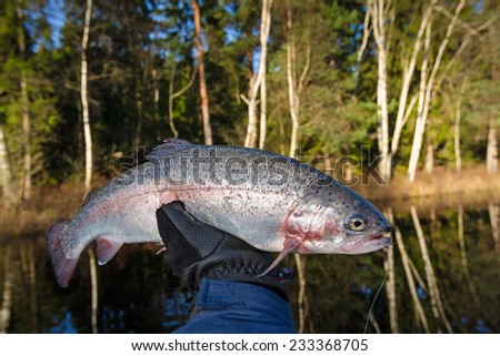 Late autumn trout trophy - stock photo