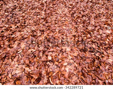 late autumn, wet beech leaves fallen to the ground as the background - stock photo