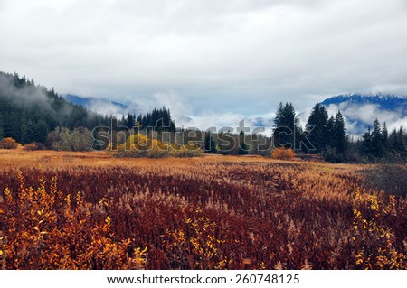 Late fall changing colors as Mendenhall viewpoint - stock photo