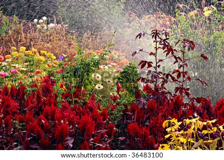 Late summer flower garden with sprinkler spraying water for abstract effect. - stock photo