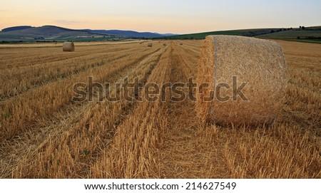 Late summer harvest - stock photo