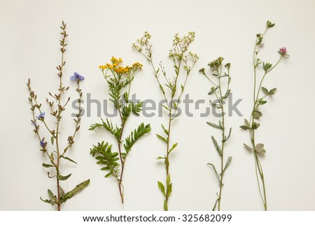 Late summer natural meadow flowers and plants on cream white background captured from above. Nature elements collection. Botany - poster concept. - stock photo