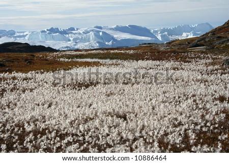 Late summer on Icefjord near Ilulissat, West Greenland - stock photo