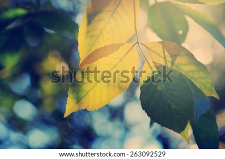 Late summer sun shining through the canopy, ecology nature scene, serene natural scene in retro style - stock photo