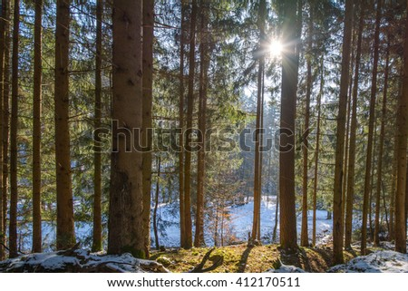 Late Winter sunlight breaking through the trees in a Sch�¶nbuch Forrest close T�¼bingen - stock photo