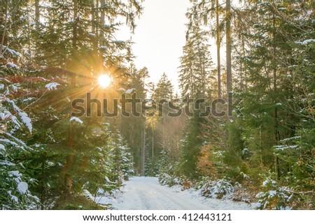 Late Winter sunlight breaking through the trees in at Schoenbuch Forrest close Tuebingen - stock photo