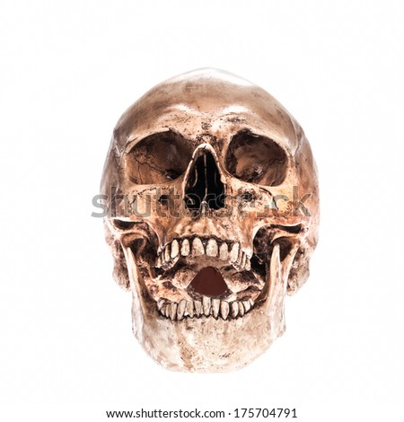 Laugh skull model bone on isolated white background - stock photo