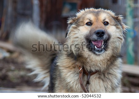 Laughing big dog on abstract background - stock photo
