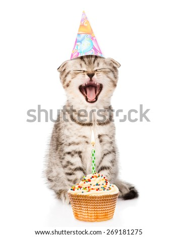 laughing cat cat  with birthday hat and cake. isolated on white background - stock photo