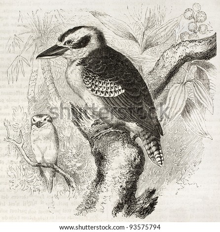 Laughing Kookaburra old illustration (Dacelo novaeguineae). Created by Kretschmer and Jahrmargt, published on Merveilles de la Nature, Bailliere et fils, Paris, ca. 1878 - stock photo