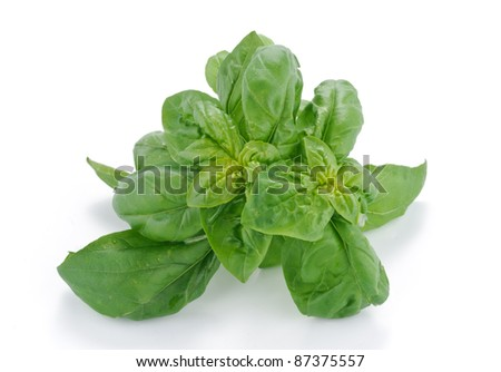 Laurel - aromatic herbs