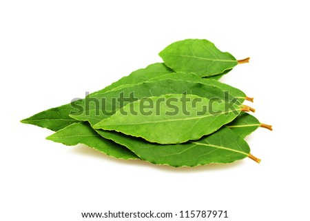 Laurel leaves isolated on white