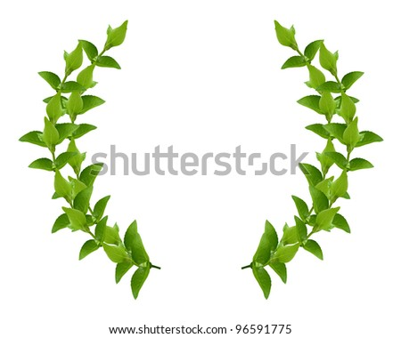 Laurel Wreath made by fresh Green leaves  isolated on white, - stock photo